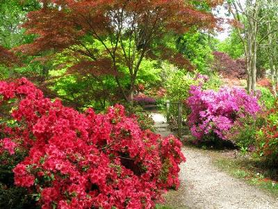 amlwch gardens