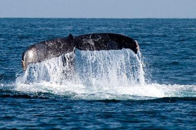 whales Anglesey